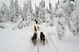 Finsko-laponsko-psi-sprezeni